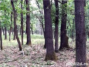 Vind teren forestier / padure foioase 300 ha langa Craiova.  - imagine 2