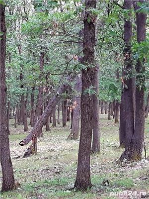 Vind teren forestier / padure foioase 300 ha langa Craiova.  - imagine 3
