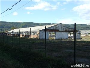 Vanzare fosta ferma animale - comuna Mihaiesti, judet Arges - imagine 4