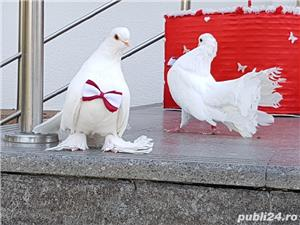 Porumbei albi si decoratiuni - imagine 1