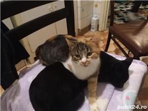 Pisică  - imagine 5
