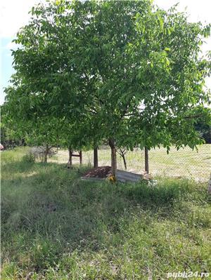 Teren Biharia 1446mp, zona verde linistita - imagine 6
