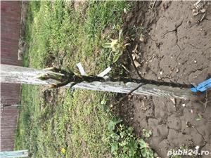 Unelte ARS CORPORATION pentru pomicultura/horticultura - imagine 5