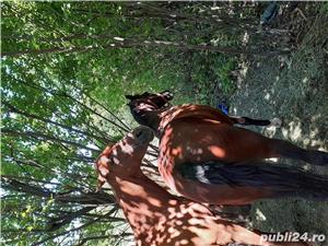 Caii de vanzare - imagine 3