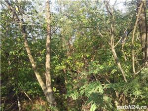 Vând 1ha de pădure Sat Slivna - imagine 2