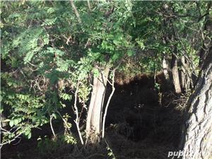Vând 1ha de pădure Sat Slivna - imagine 1