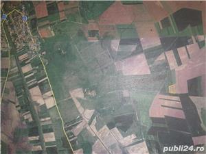 Teren agricol 19300 m2 Sanmihaiu Roman ,12500 euro, persoana fizica - imagine 2