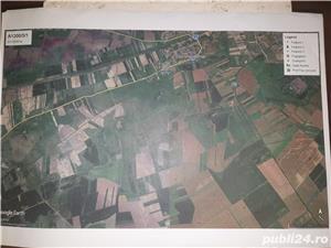 Teren agricol 19300 m2 Sanmihaiu Roman ,12500 euro, persoana fizica - imagine 1