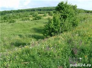 Teren 1900mp sat Todirel, Barnova - imagine 2