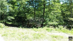 Vand teren si padure conifere in Albestii de Muscel. - imagine 2