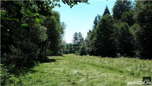Vand teren si padure conifere in Albestii de Muscel. - imagine 1