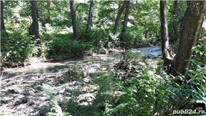 Vand teren si padure conifere in Albestii de Muscel. - imagine 3