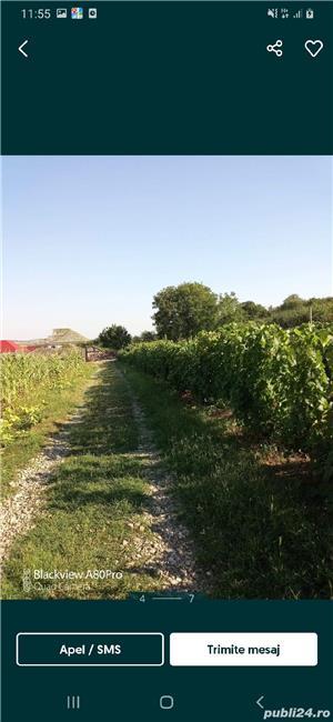 teren dealul viilor - imagine 5