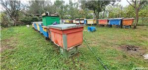 Miere de albine poliflora - imagine 4
