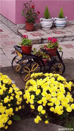 jardiniere curte - imagine 10