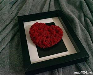 Inima licheni stabilizati  - imagine 2