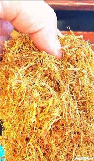 Tutun Firicel de import 99 lei kg - imagine 6