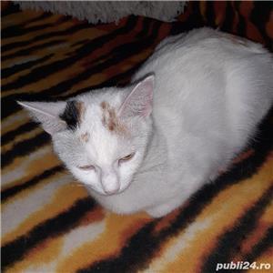 ofer gratis pui pisica  - imagine 7