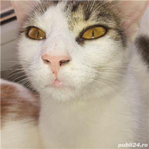 ofer gratis pui pisica  - imagine 4