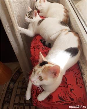 ofer gratis pui pisica  - imagine 6