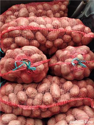 vand cartof alb si rosu - imagine 3