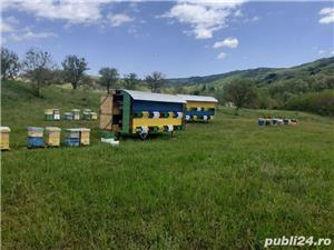 Pavilioane apicole  - imagine 2