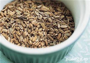 Seminte de fenicul.100%natural, fara aditivi sau conservanți.100g/5 lei. - imagine 5