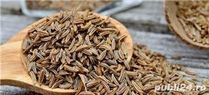 Seminte de fenicul.100%natural, fara aditivi sau conservanți.100g/5 lei. - imagine 2