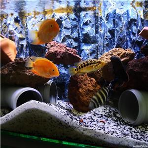 Vand acvarii de 200l si 240l,complet echipate,si cu pesti diferite specii.Se vand si separat . - imagine 3