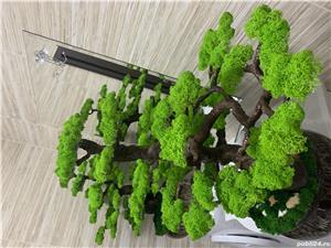 Bonsai cu licheni naturali ! - imagine 4