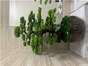 Bonsai cu licheni naturali ! - imagine 1