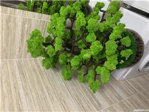 Bonsai cu licheni naturali ! - imagine 3