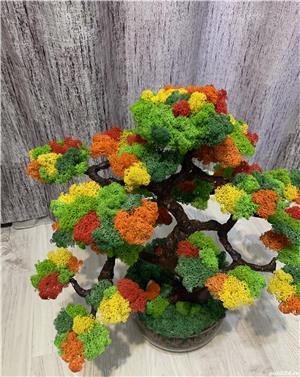 Bonsai cu licheni naturali ! - imagine 9