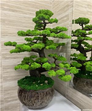 Bonsai cu licheni naturali ! - imagine 5