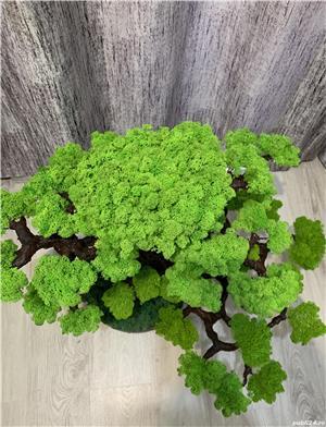 Bonsai cu licheni naturali ! - imagine 6