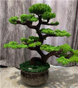 Bonsai cu licheni naturali ! - imagine 8