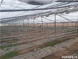 angajam muncitori legumicultura  - imagine 3