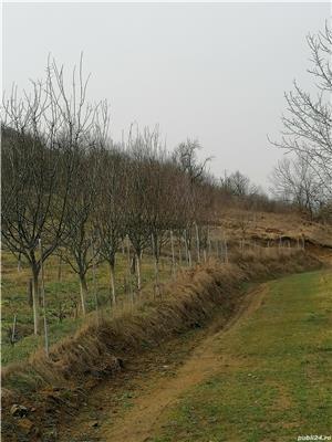 Vând teren Lesnic - imagine 6