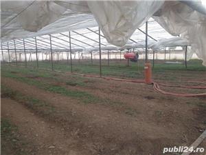 angajam muncitori legumicultura  - imagine 1