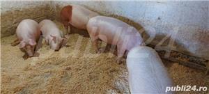 porci de vanzare - imagine 4
