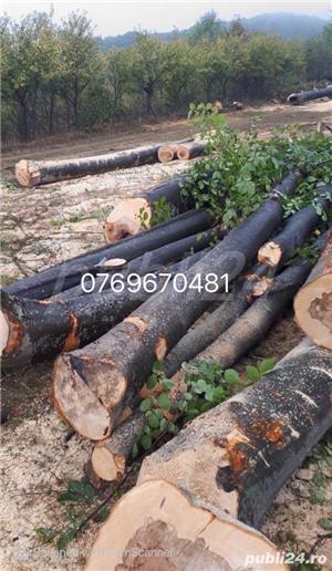 lemn foc:    - imagine 5