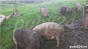 Vând porci pt sacrificat și soldani - imagine 2