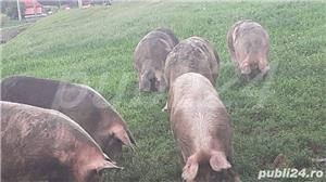 Vând porci pt sacrificat și soldani - imagine 1