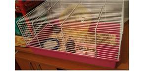 Cusca Ferplast complet accesorizata-/+Hamsteri Pitici blanzi - imagine 4