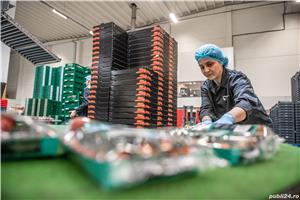 Locuri de muncă în Olanda - Agricultură - Sere și depozite de roșii - imagine 5