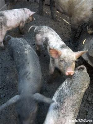 Vand  porcii - imagine 7