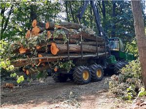 Caut prestari servicii in domeniul forestier - imagine 2