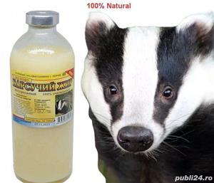 Grasime de bursuc naturala 100% - imagine 2